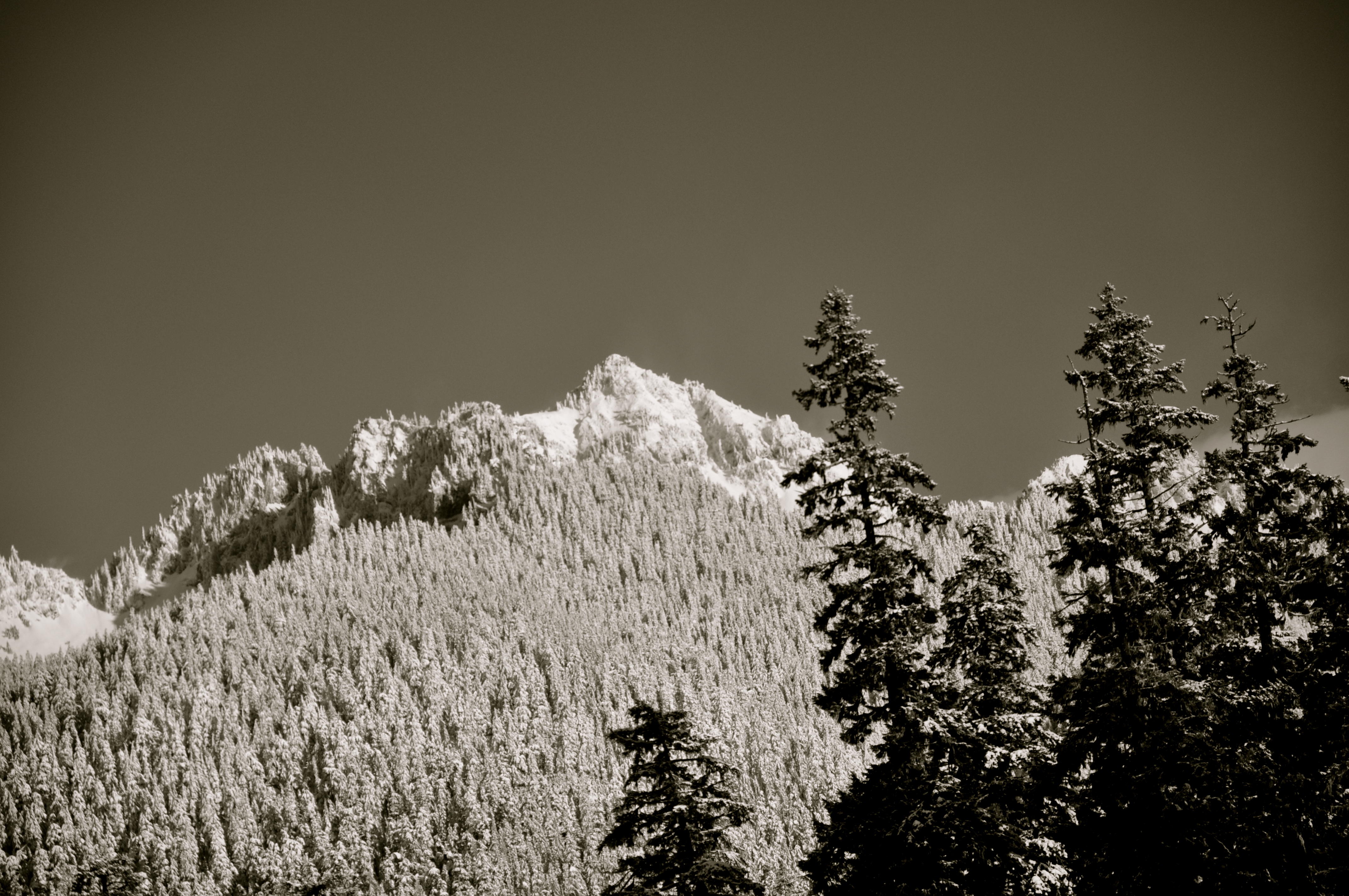 Looking up into the western edge of the Tatoosh Range.